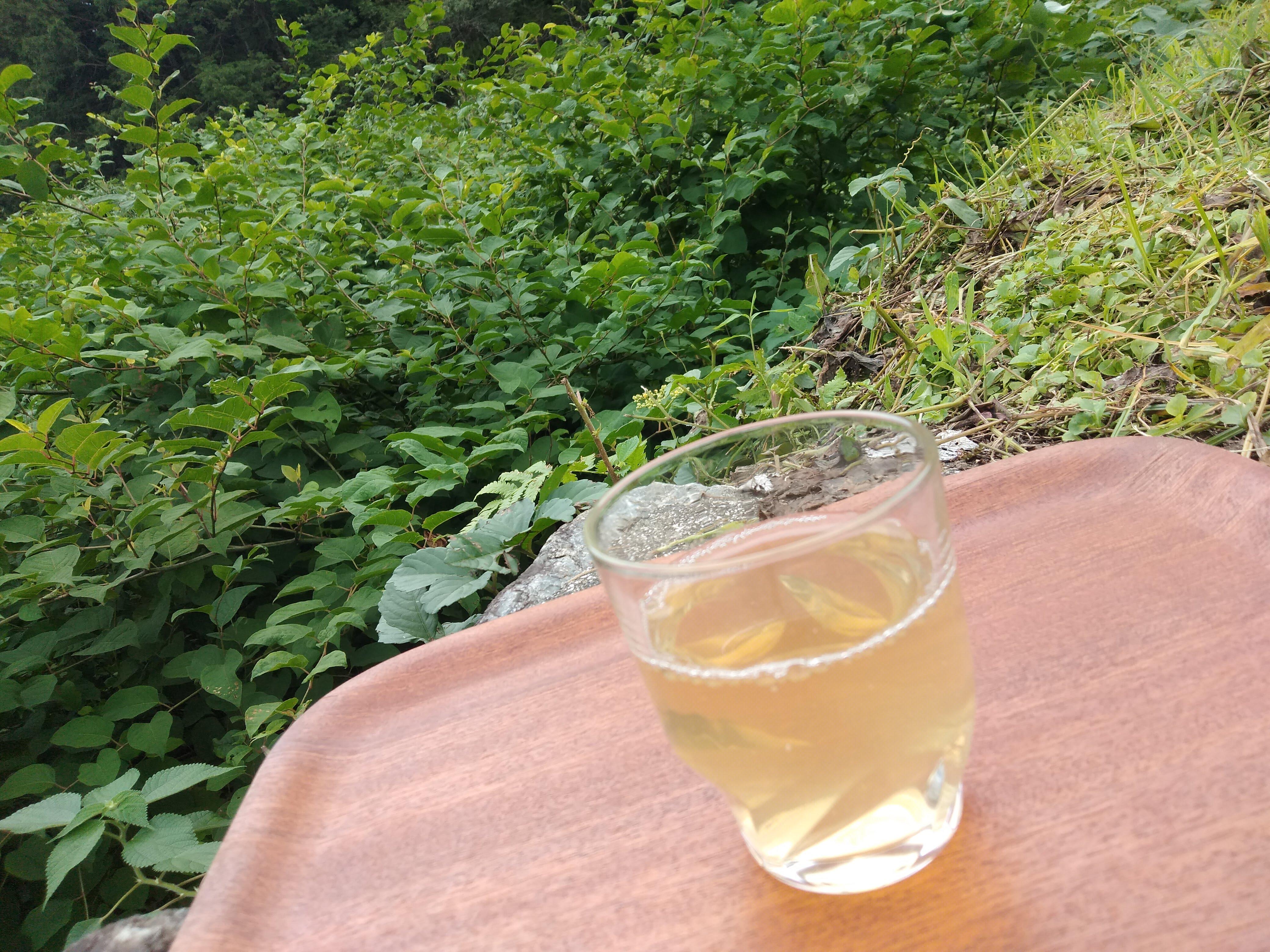 イタドリ茶の作り方